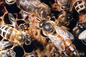 ants and bees similarities